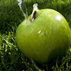 Apple Mane