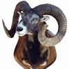 Refuge Du Toubkal les Mouflons
