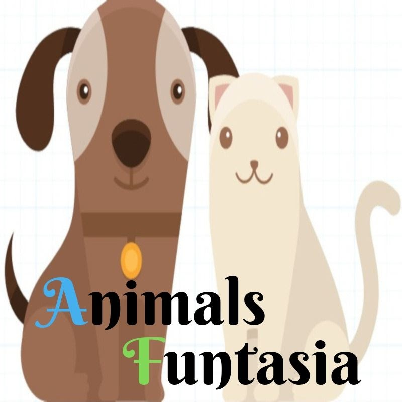 Animals Funtasia (animals-funtasia)