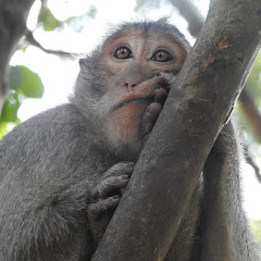 Monkey Daily