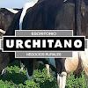 Escritorio Urchitano