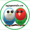 Agapornis Arias