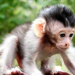 Monkey Wildlife Net Worth