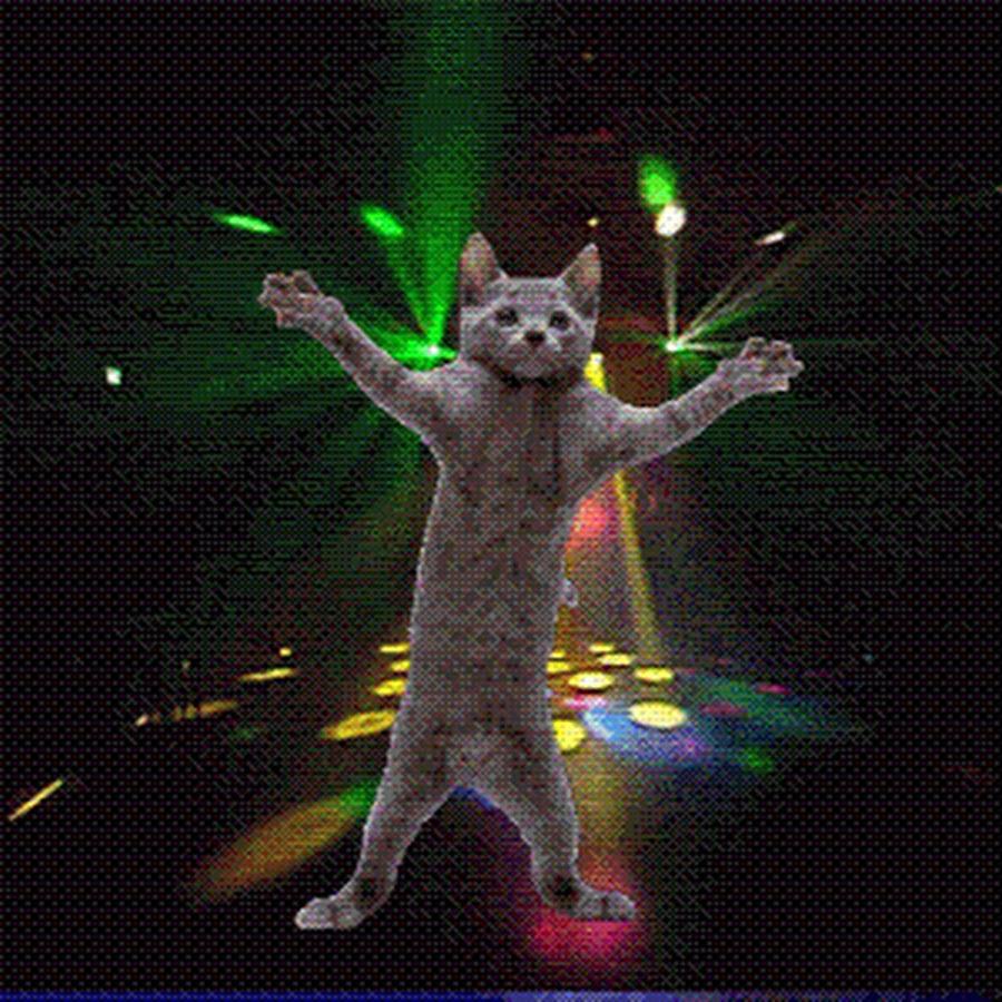 Гифка кот танцует под музыку