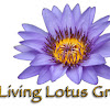 Living Lotus Group -jewels of the lotus