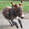 Tiny Tim The Donkey