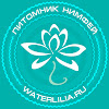 Нимфеи WaterLilia ru продажа нимфей кувшинок