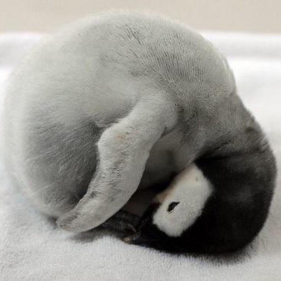 существующему картинка спящий пингвин нужно сделать набросок