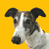 Magnus Greyhound