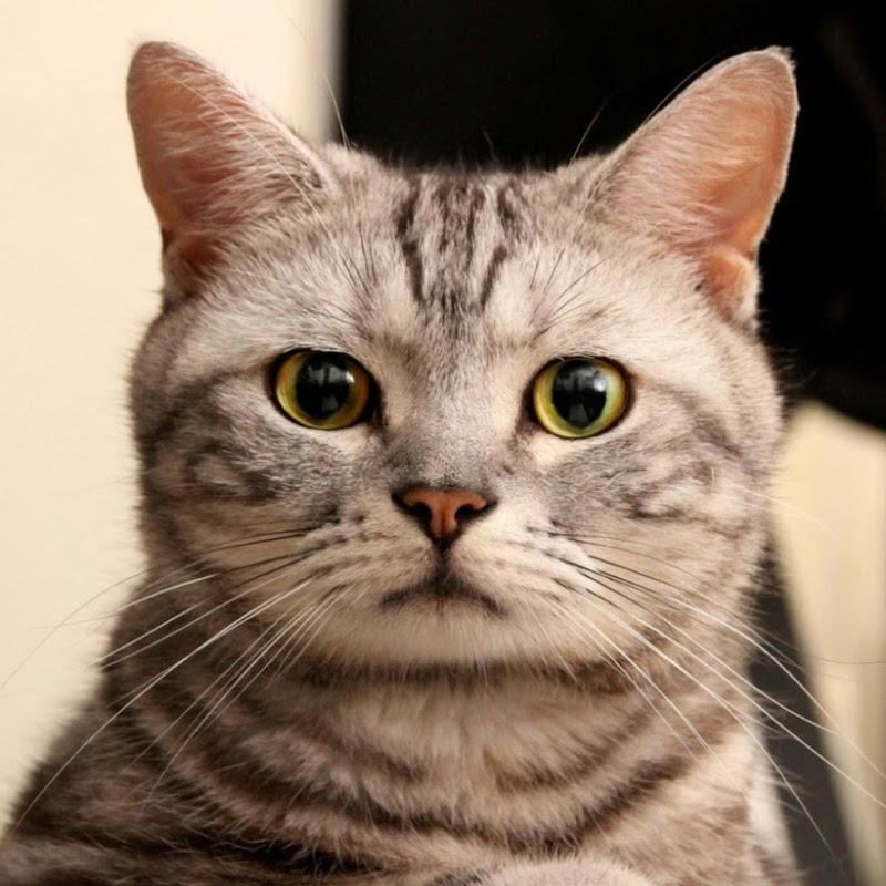 Download 95+  Gambar Kucing Konyol Paling Bagus Gratis