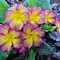 Елена Мир семян и цветов