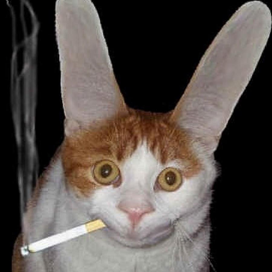 Прикольная картинка заяц курит
