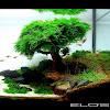 ELOS - The Aquarium Company - Italy