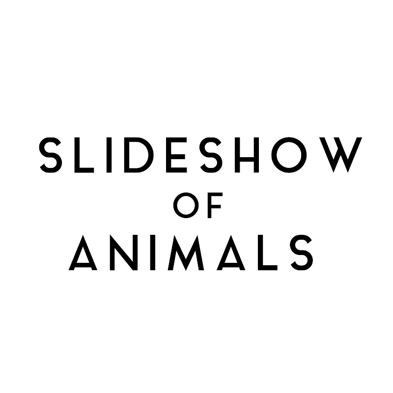 Slideshow Of Animals