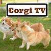 Corgi TV