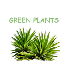 Green plants Net Worth