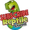 Reptile Channel