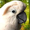 Parrot Town