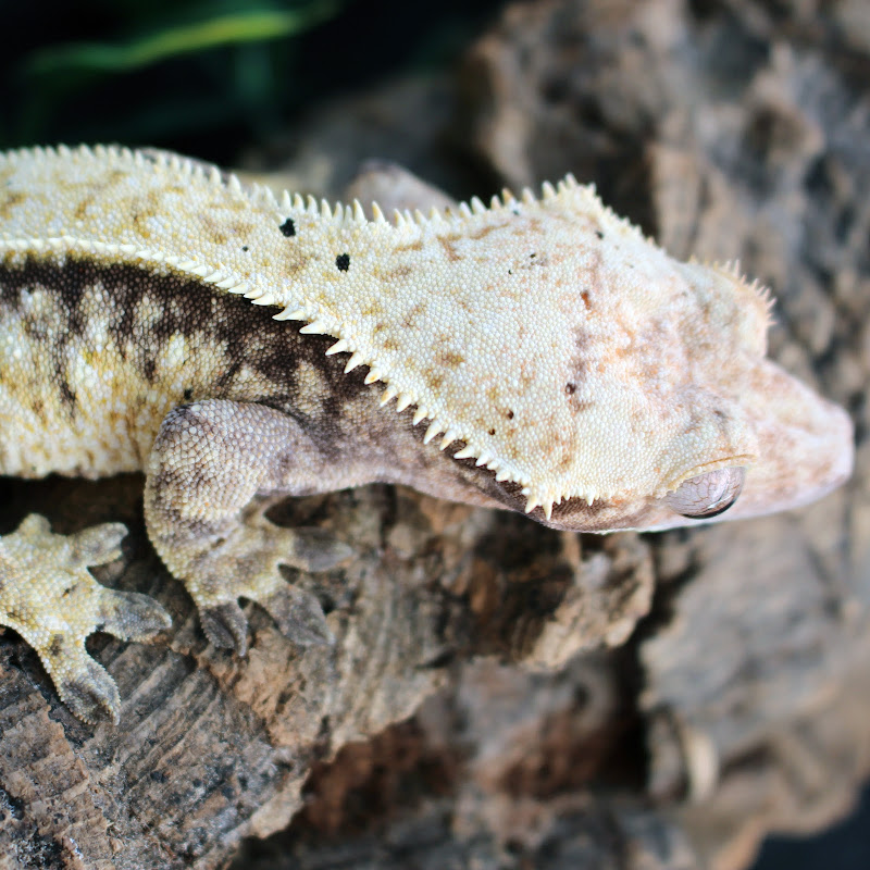 KLW Reptiles (kinzie-lynn-wilson)