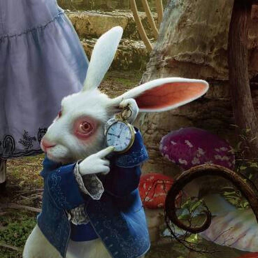 Для открытки, белый кролик картинки алиса