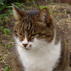 Коты и дача - Кот прикол - Сад и огород