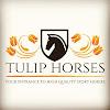 Tulip Horses