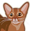 Kotopurrs abyssinian cats