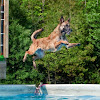 K9 Central Pet Resort, Training and Spa
