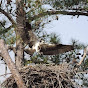 Lake Murray Osprey
