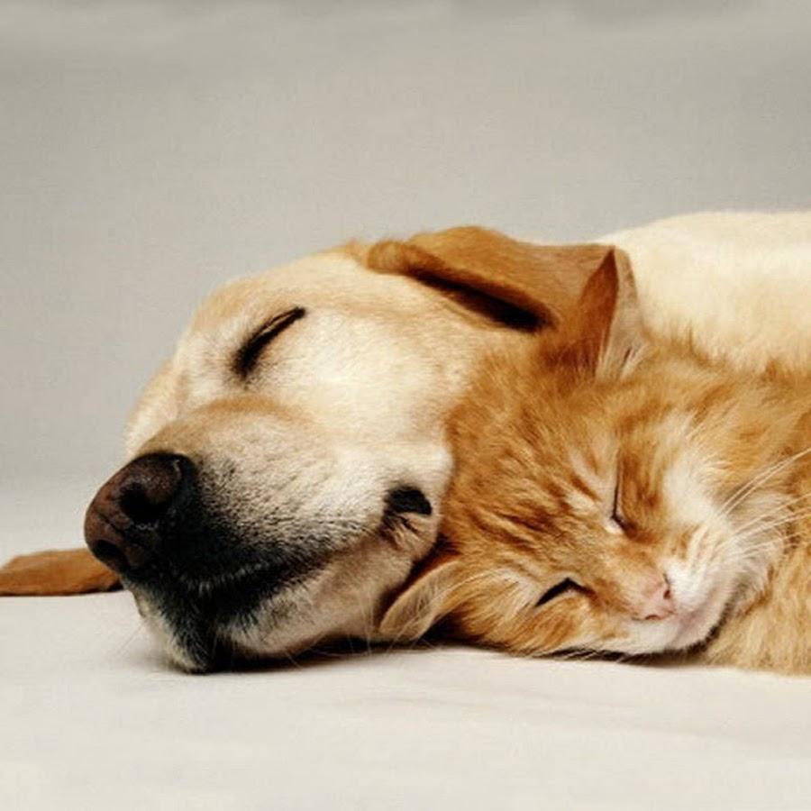 Открытки сладких снов с собачками