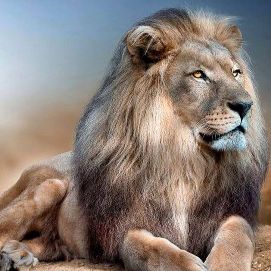 лев шатов