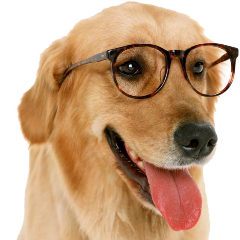 Top Dog Videos