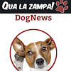 Qualazampa News