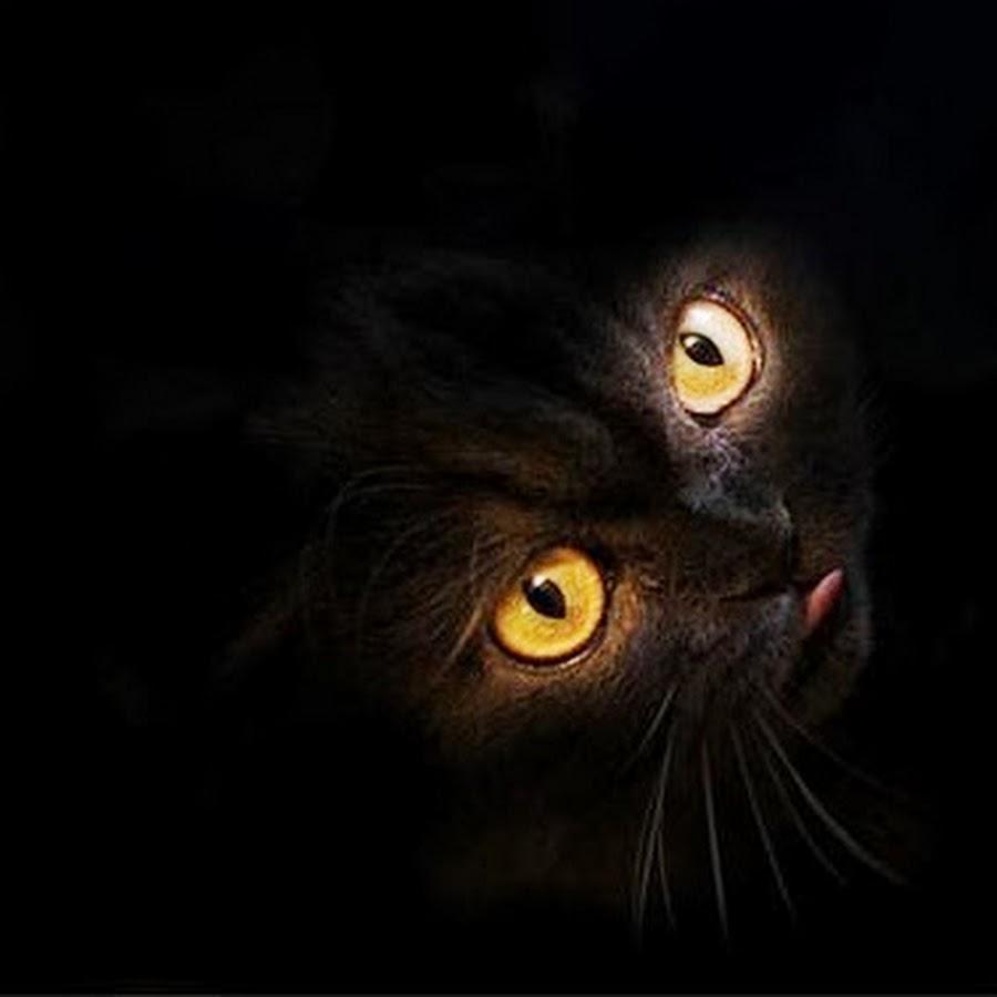 Прикольные картинки про темноту, мая