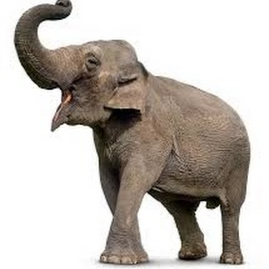 Elephanttube Vom