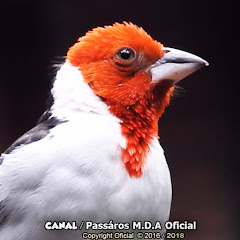 PASSAROS M.D.A OFICIAL
