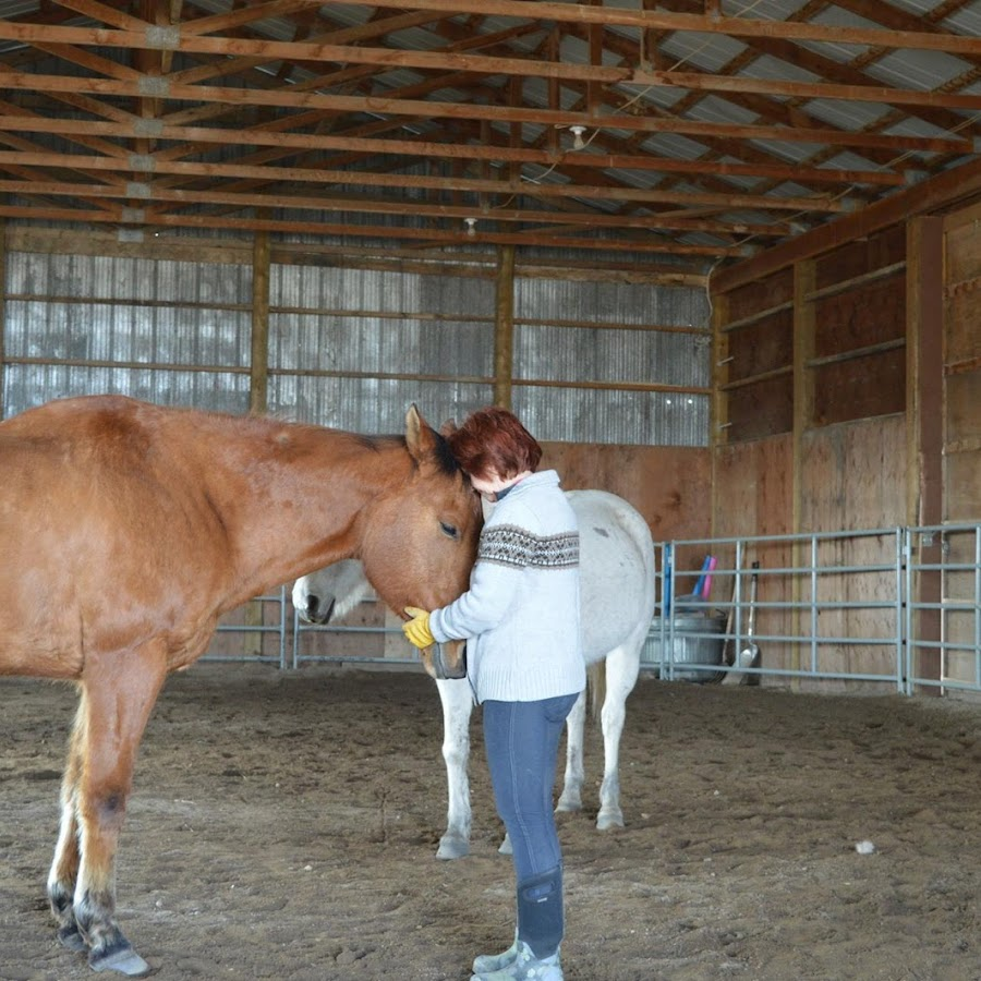equine health revi due - 900×900