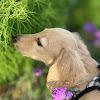 Bears Craft byうりぼんぬ