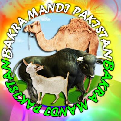 Bakra Mandi Pakistan Official   الأردن VLIP-VLIP LV