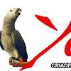 Criadero Yaco