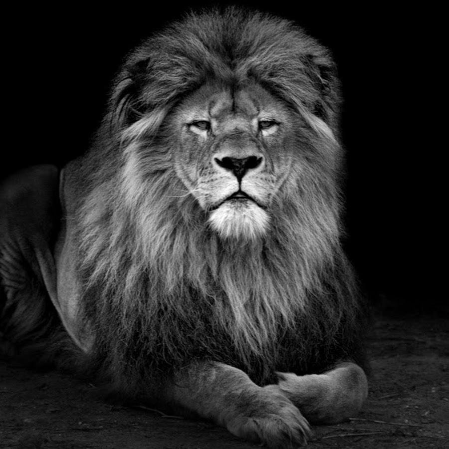 Картинки льва в черно белом цвете, картинки двойняшки