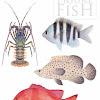 Stick Figure Fish Illustration