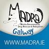 Madra Galway