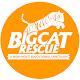 Image of Big Cat Rescue