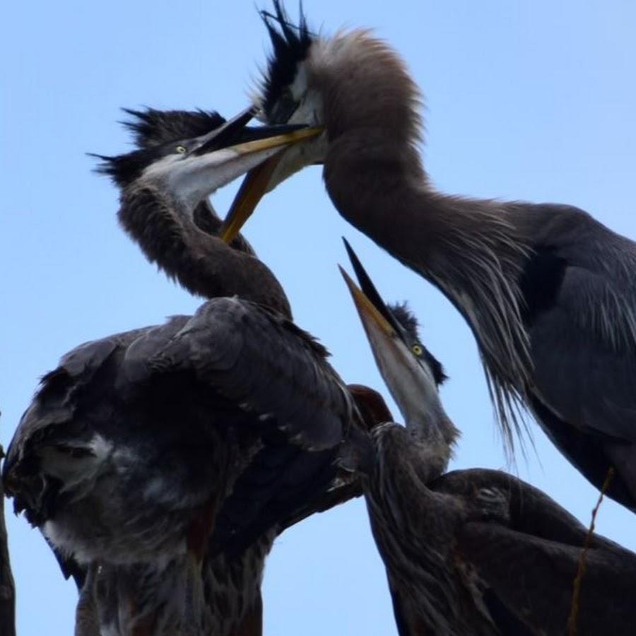 7 News Denver Zoo: AliasAnimo