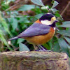 musashinobird