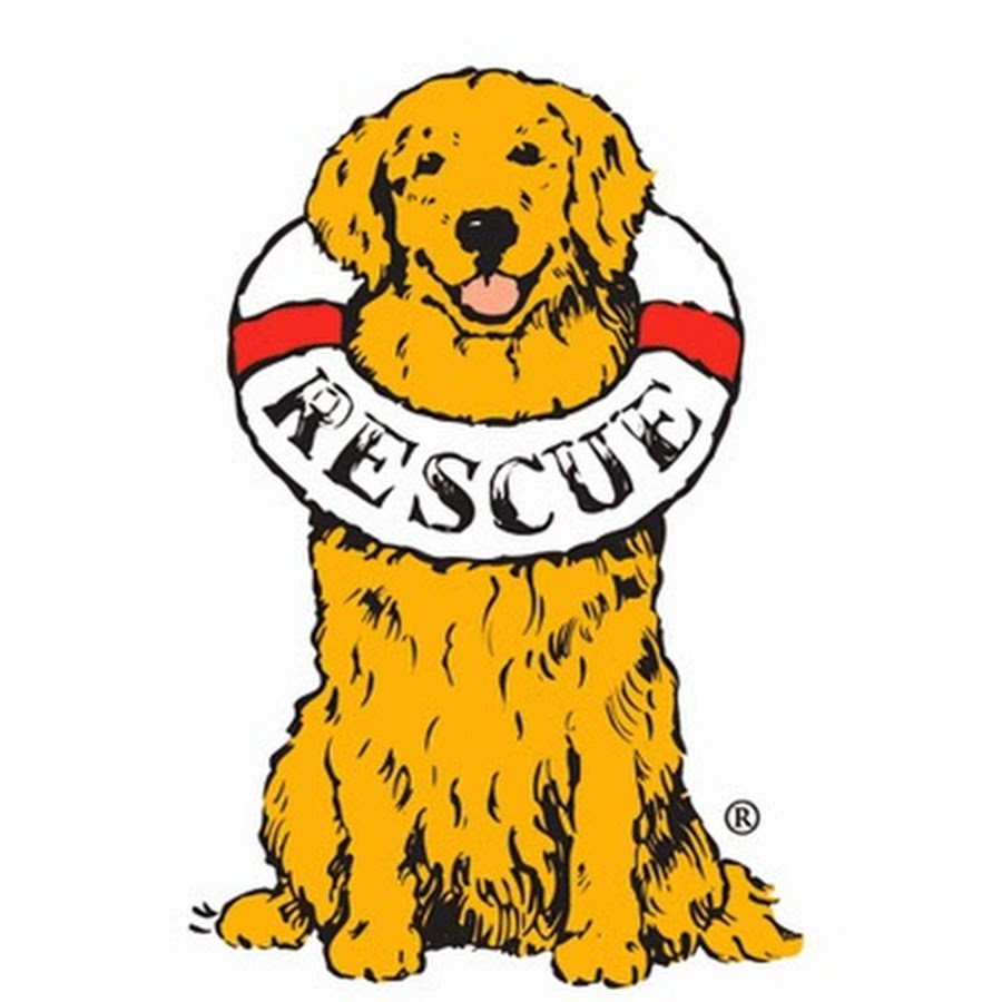 Delaware Valley Golden Retriever Rescue - YouTube