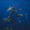 Shark Addicts TV