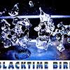 BlacktimeBird