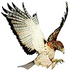 Hawk Multimedia
